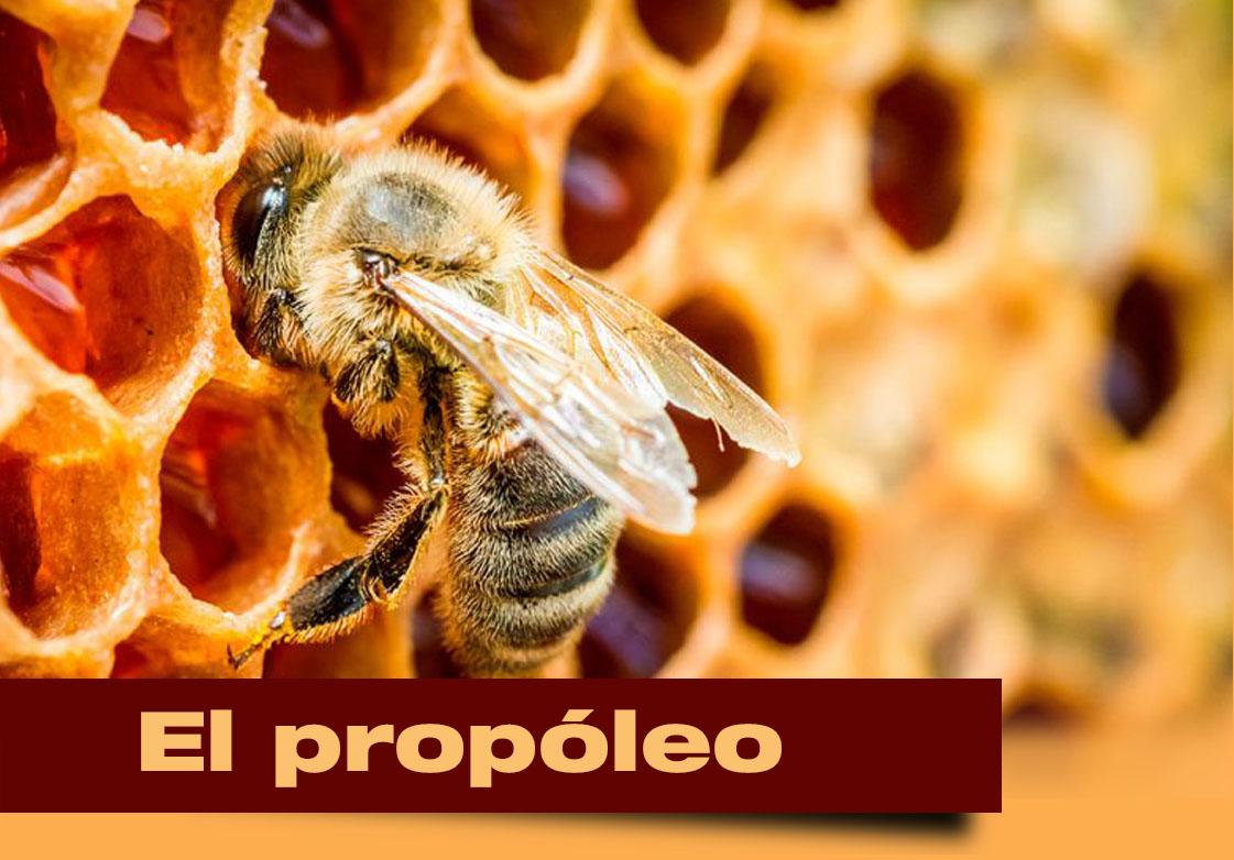EL PROPÓLEO